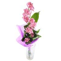 Ветка розовой орхидеи