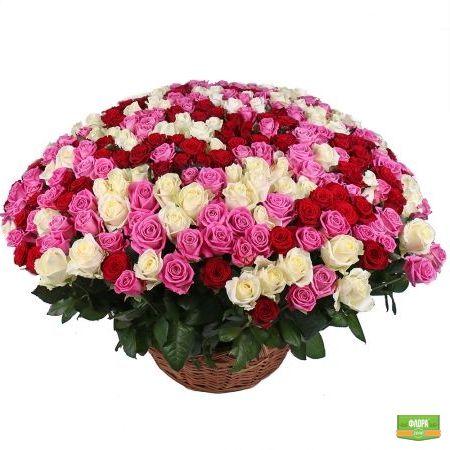 Ассорти из 301 розы