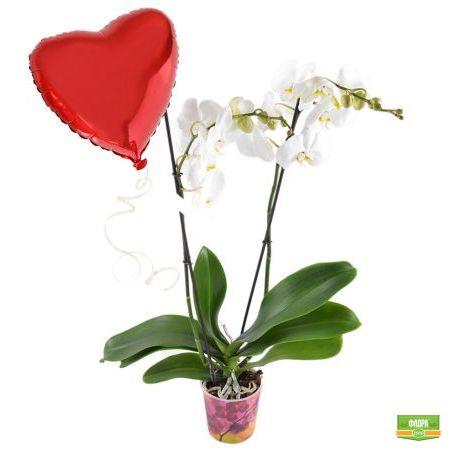 Белая орхидея + шарик сердце