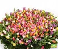 Букет 1001 тюльпан