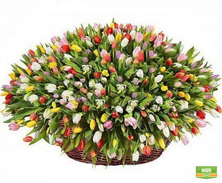 Букет 501 тюльпан