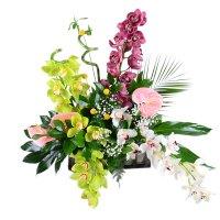 Букет с орхидеями,  заказать орхидеи с доставкой