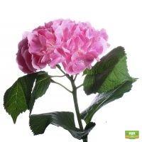 Гортензия розовая поштучно