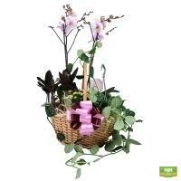 Купить композицию из комнатных растений в корзина