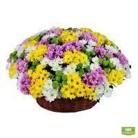 Заказать букет цветов «Корзина из хризантем (101 шт.)» с доставкой