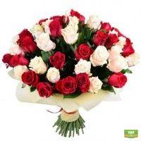 Красно-кремовые розы (51 шт.)