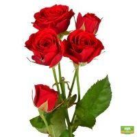 Заказать красивые Красные кустовые розы поштучно с доставкой в любой город