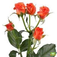 Заказать оранжевые розы с доставкой в любой город
