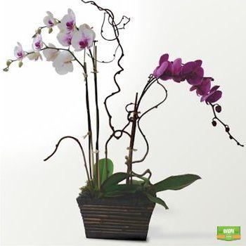 Орхидейная композиция