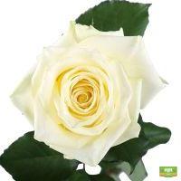 Заказать букет из белых роз в интернет-магазине