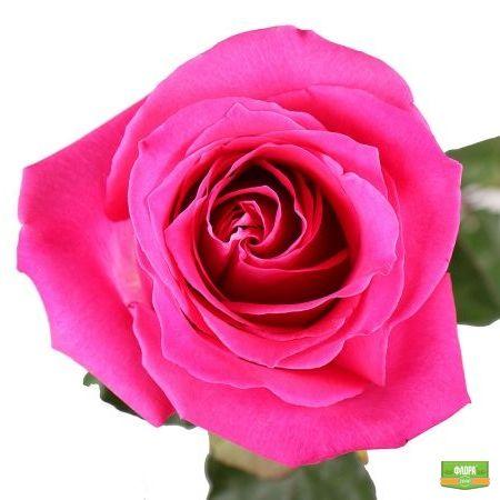 Розовые премиум розы поштучно