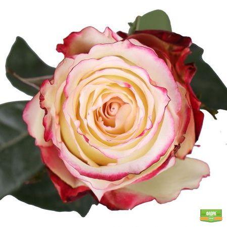 Свитнес премиум розы поштучно