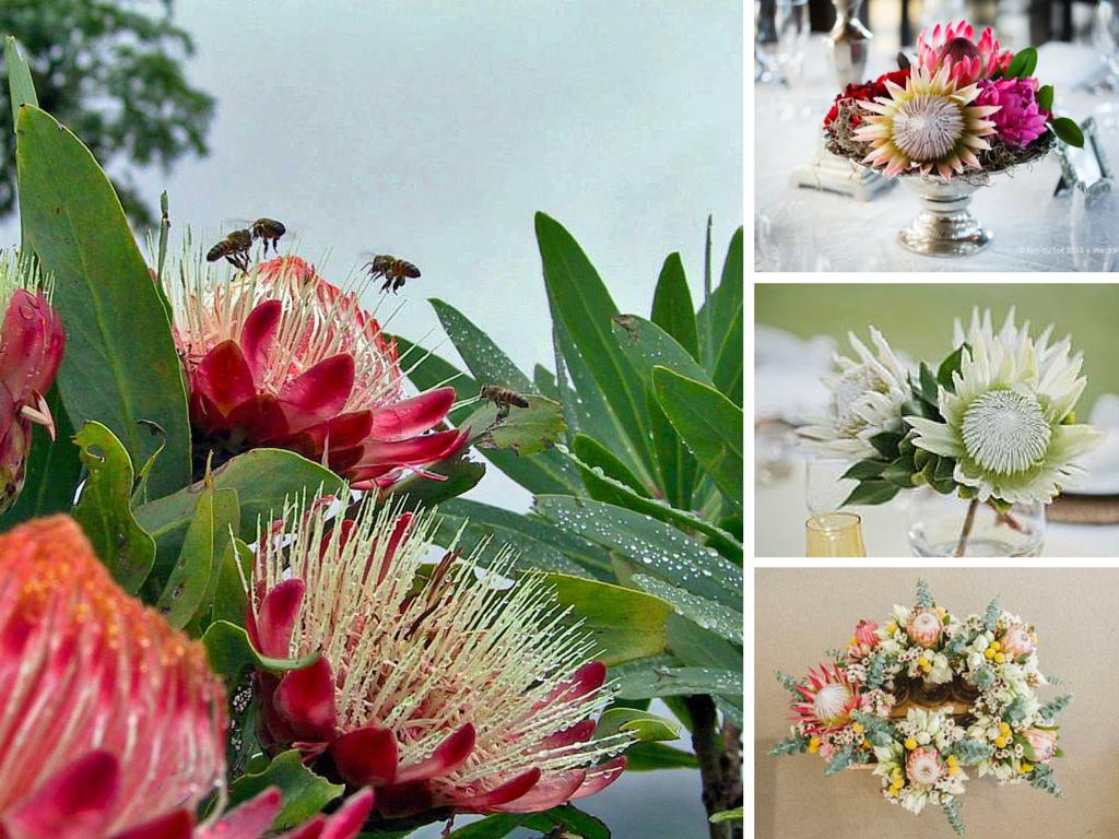 экзотические цветы для букетов названия и фото