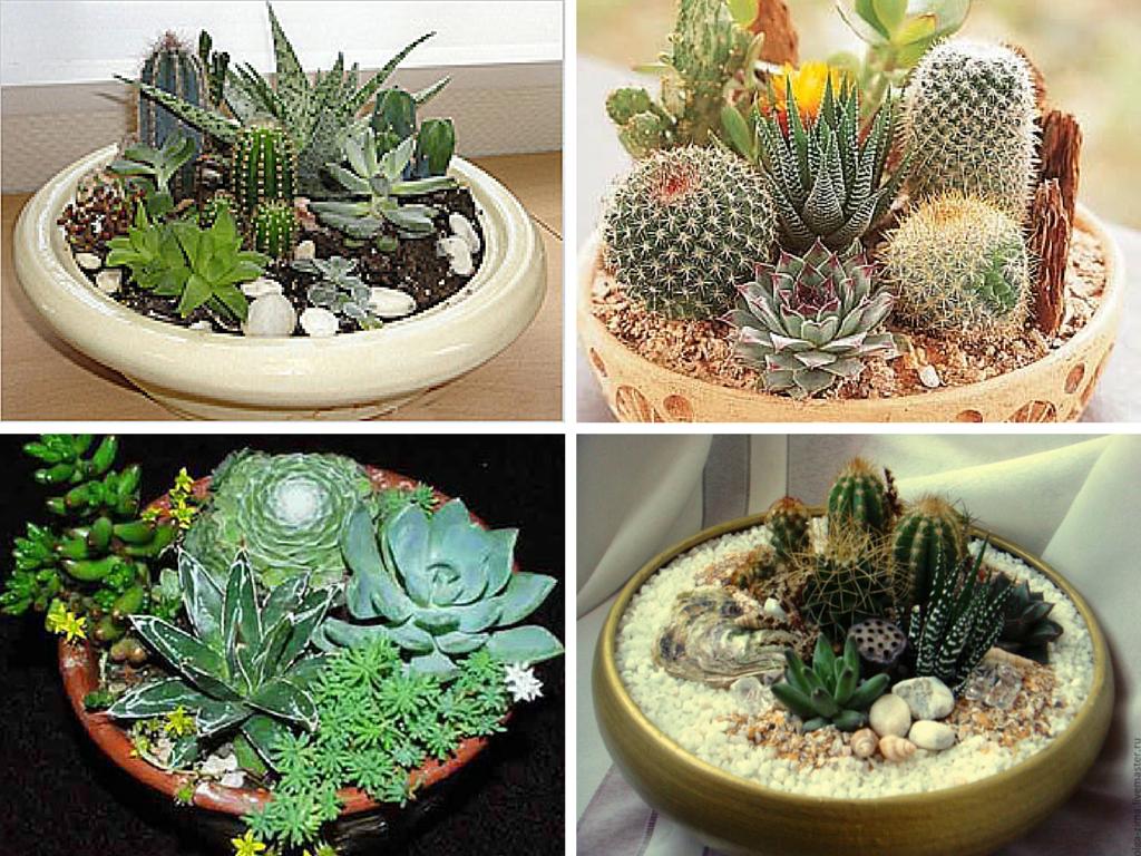 Какие растения сажать вместе 44