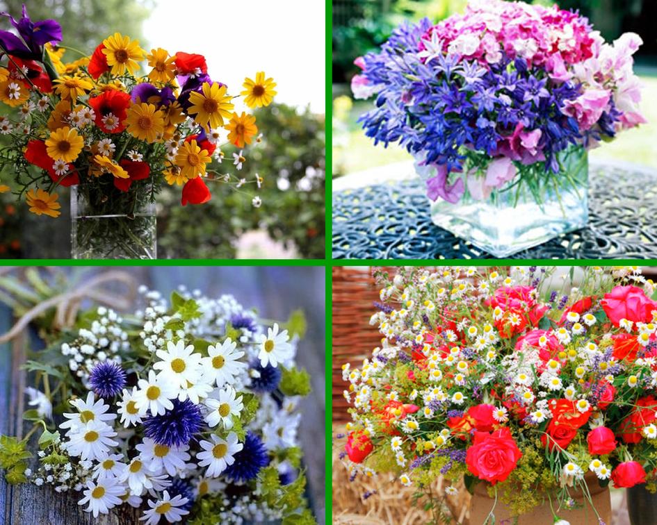 Из истории полевых цветов