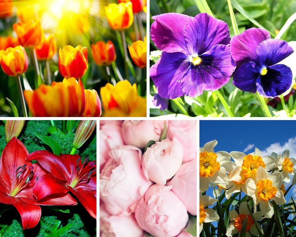 Цветочные традиции Франции - красивые цветы