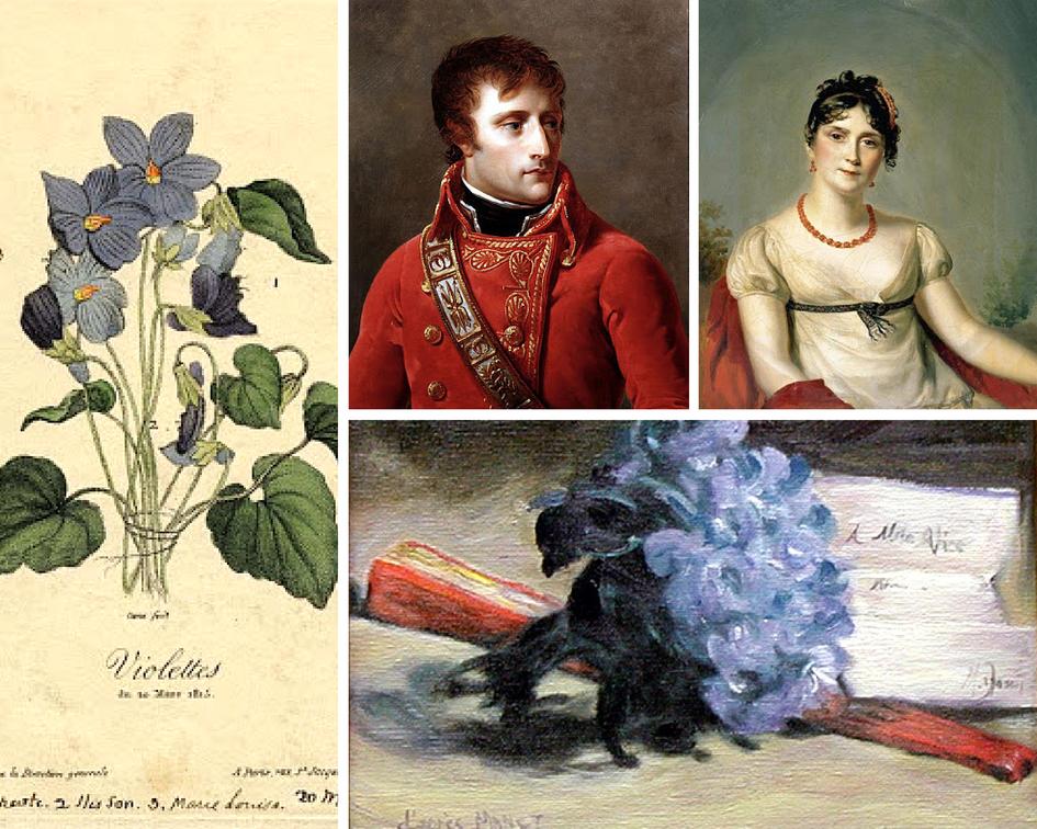 Цветочные традиции и обычаи Франции - фиалка