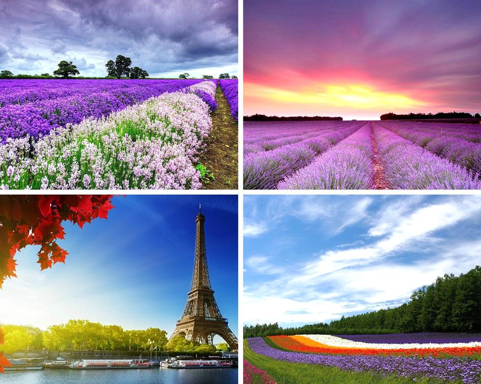 Цветочные традиции Франции - лаванда и Прованс