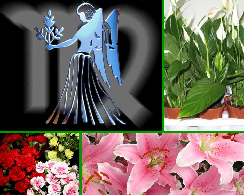 Цветы знаков зодиака в картинках