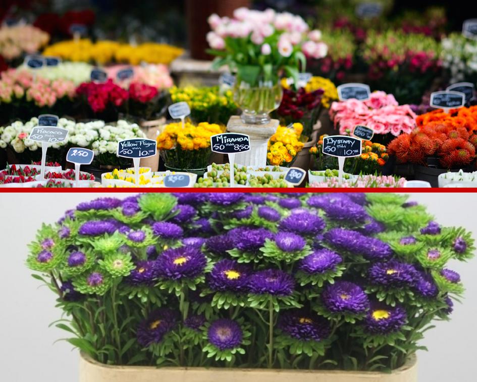 Цветы на аукционах фото