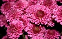 Язык цветов. Что означают цветы