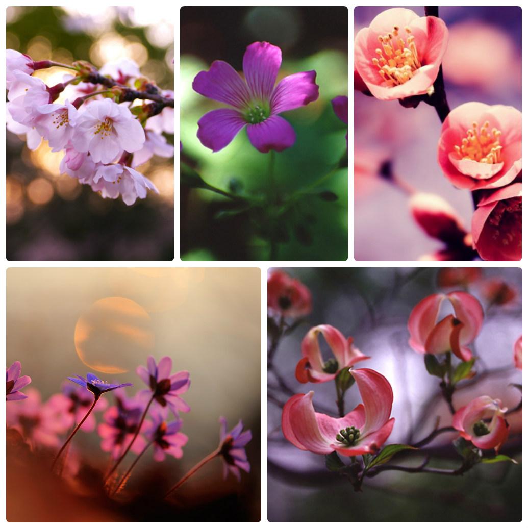 ложись думай как сфотографировать цветок макро шедевром монстры сделали
