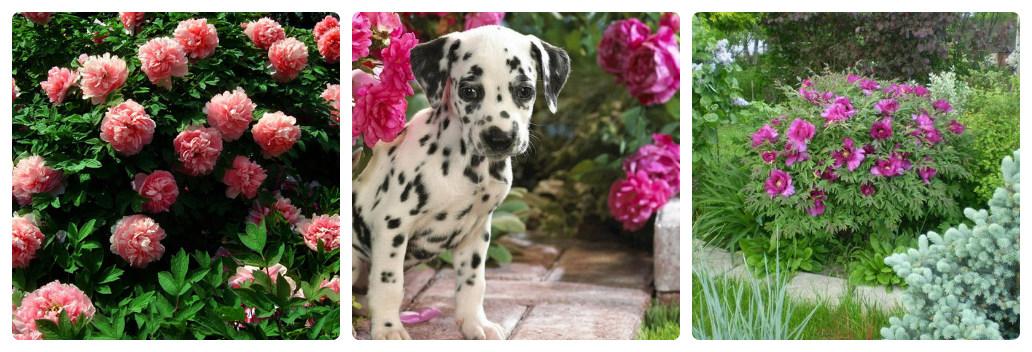 Цветы сальвия: фото, описание, когда сажать, как ухаживать 60