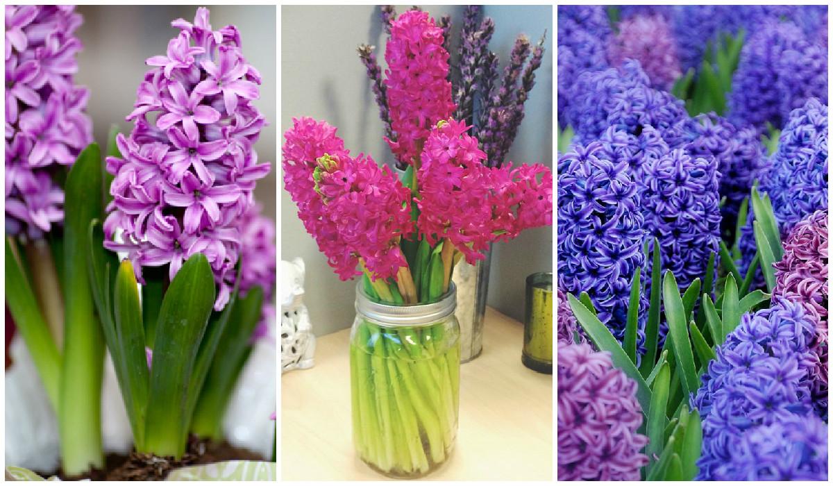 Домашниерастенияру комнатные растения с названиями и фото