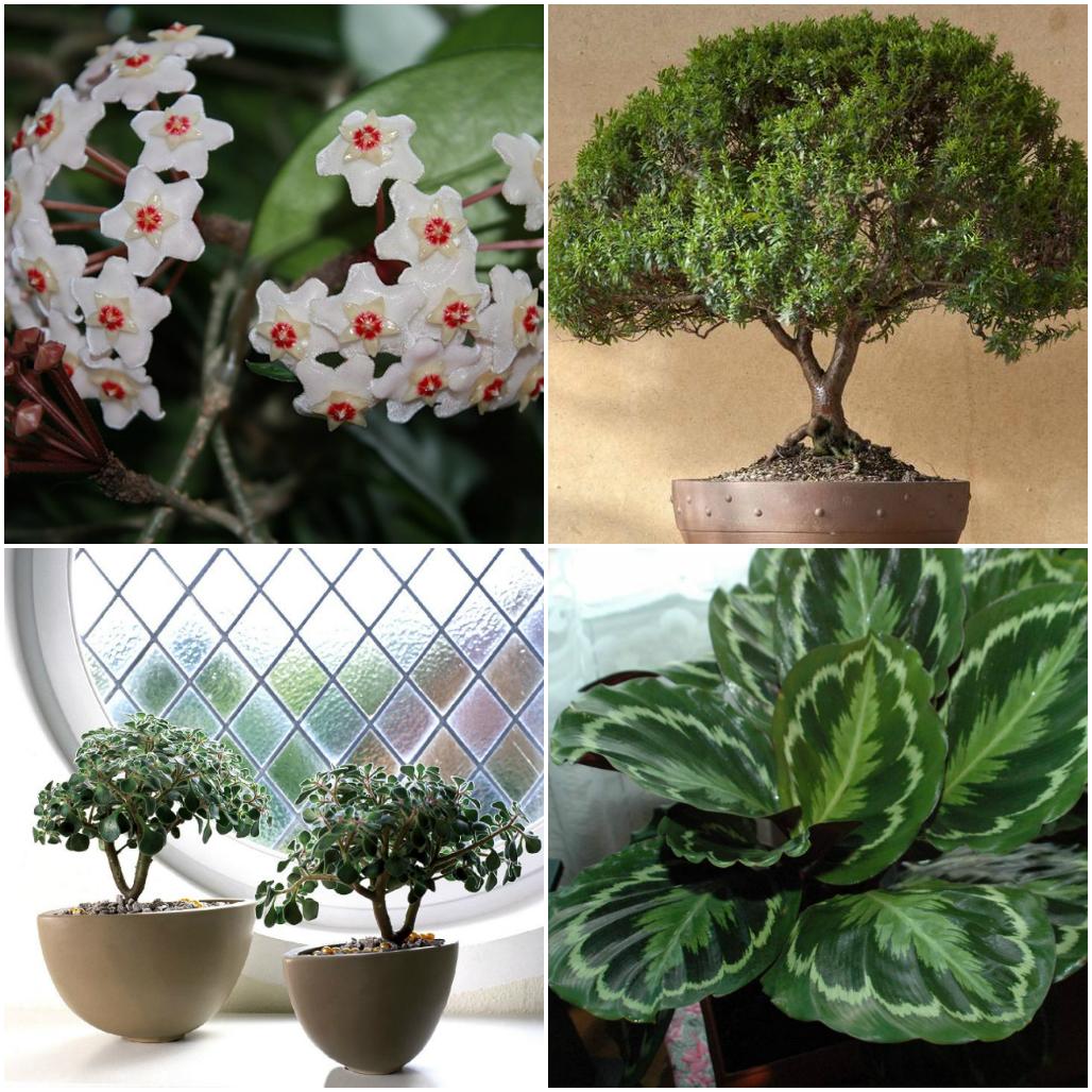 благоприятные растения для дома фото с названиями женщина
