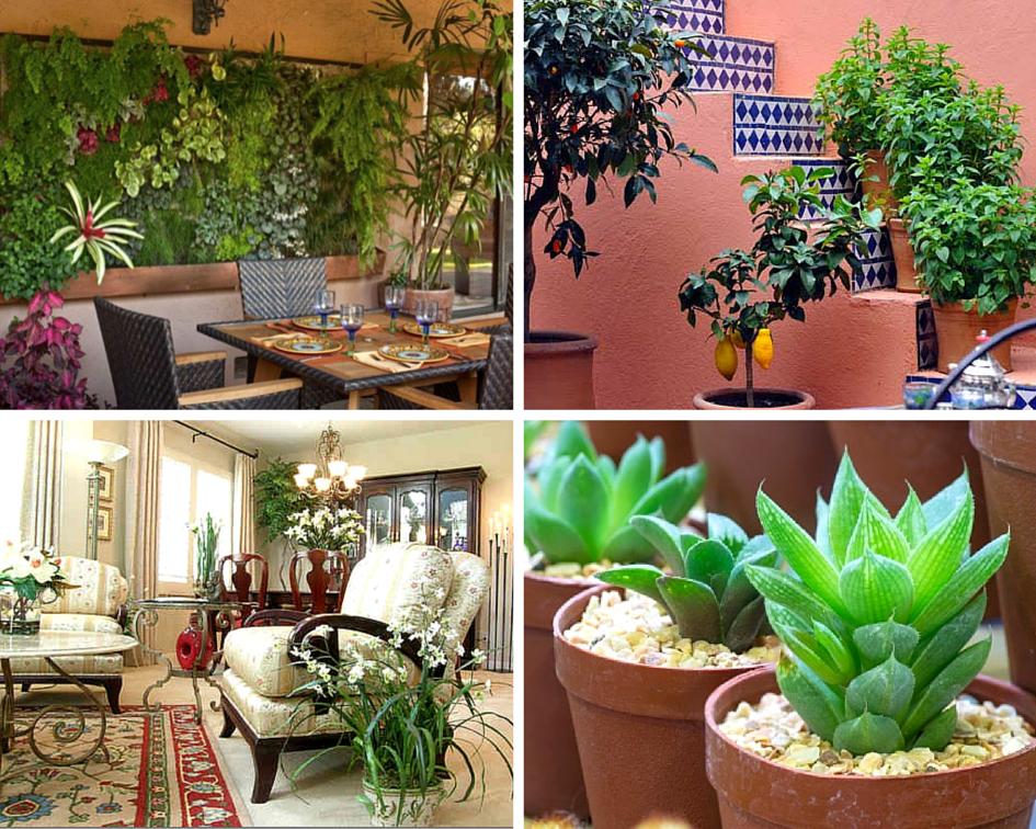 Осенних, какие растения должны быть в квартире по фен шуй
