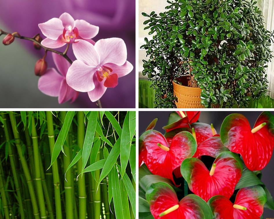 Цветы в квартире по фэн шуй, цветов онлайн