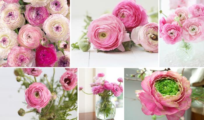 Цветок ранункулюс вырастить дома