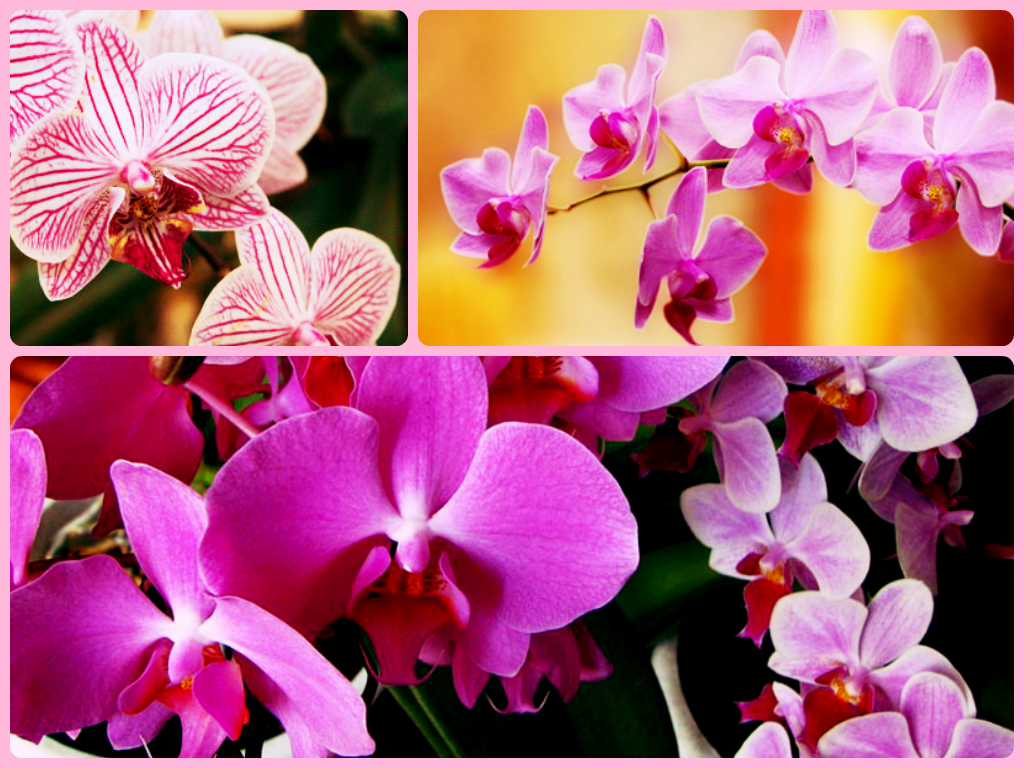 Какие бывают орхидеи
