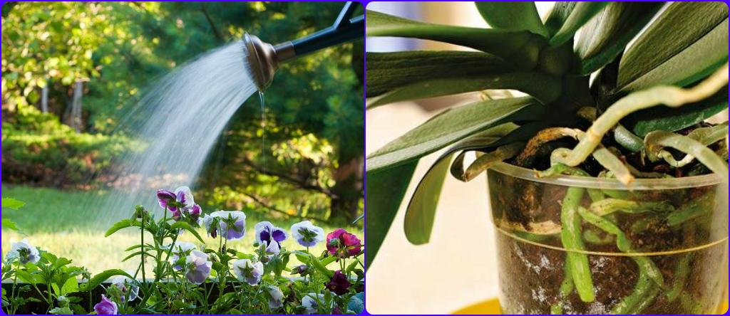 картинки дождь поливает растения