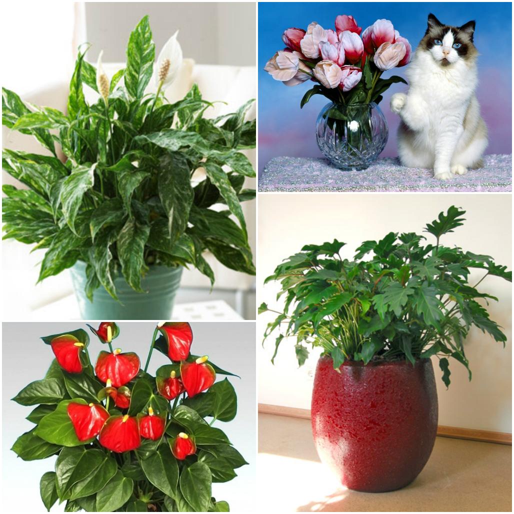 цветы ядовитые картинки домашние животные актер театра кино