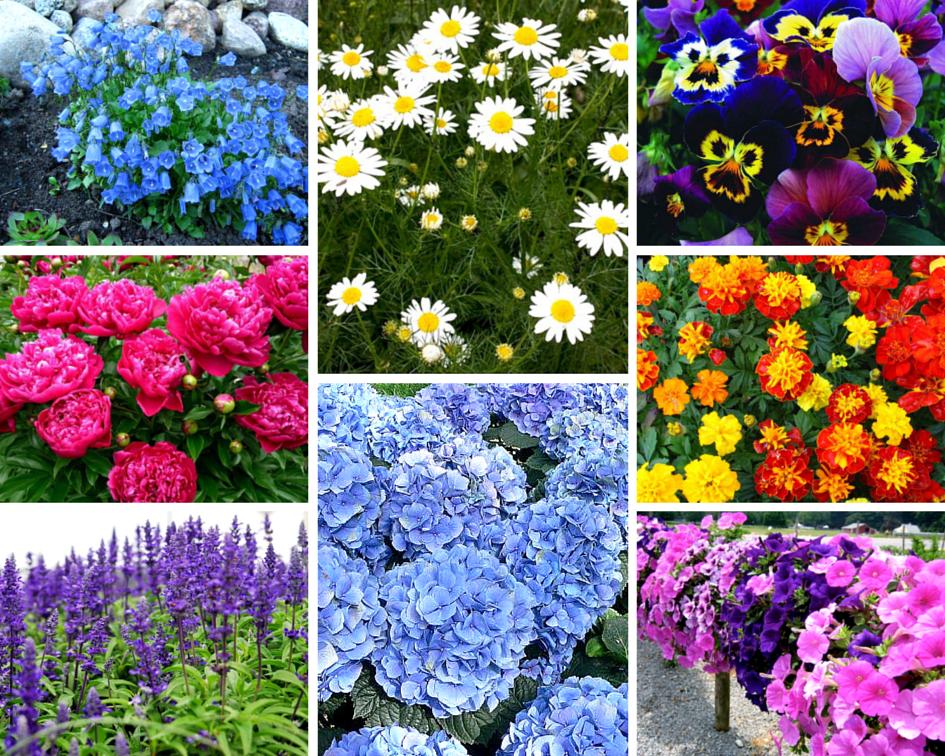 Какие цветы цветут осенью многолетние