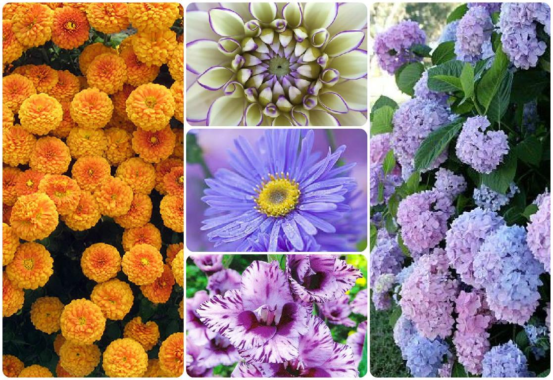 Цветы распускающиеся в августе