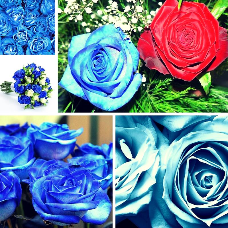 Синие розы в Москве