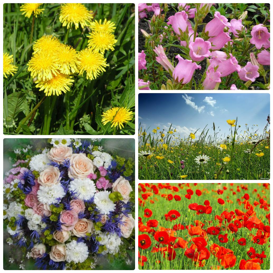 Букет полевых цветов высокого 93