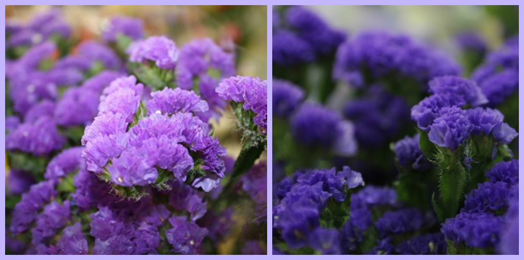 Названия фиолетовых цветов и названиями 73