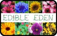 syedobnyie_tsvetyi_v_kulinarii Как сделать съедобный цветок